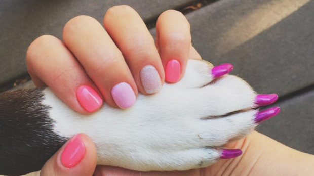 Dog toenail polish